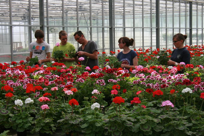 Campus de pouill accueil apprentissage horticulture for Catalogue de plantes